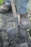 Giardiniere che scava in su immagine stock libera da diritti