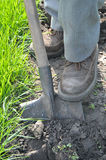 Giardiniere che scava in su Immagini Stock Libere da Diritti