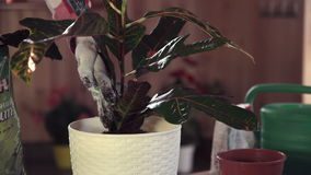 Giardiniere che tende pianta in vaso video d archivio