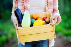 Giardiniere che tiene cassa di legno con le verdure organiche fresche Immagini Stock