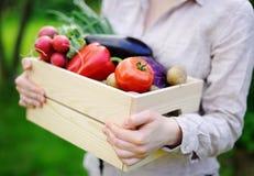 Giardiniere che tiene cassa di legno con le verdure organiche fresche dall'azienda agricola Immagine Stock Libera da Diritti