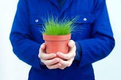 Giardiniere che tiene erba verde conservata in vaso Fotografie Stock