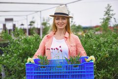 Giardiniere con i fiori Immagine Stock Libera da Diritti