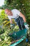 Giardiniere con la carriola di ruota che funziona nel giardino Immagine Stock