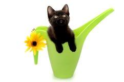 Giardiniere del gattino Fotografia Stock