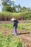 Giardiniere dell'agricoltore che tiene un rastrello Immagine Stock Libera da Diritti