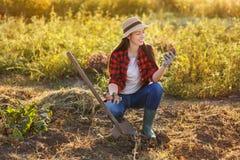 Giardiniere della donna con le patate Fotografia Stock