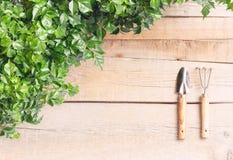 Giardiniere della Tabella Le foglie Radermahera in un vaso di fiore su un backgroundon di legno leggero un fondo di legno leggero fotografie stock libere da diritti