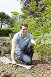 Giardiniere di paesaggio Planting Hedge Immagini Stock