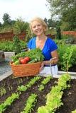 Giardiniere e verdure senior. fotografie stock libere da diritti