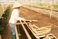 Giardiniere femminile che lavora nel giardino Fotografia Stock Libera da Diritti