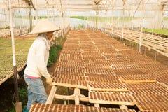 Giardiniere femminile che lavora nel giardino Fotografie Stock Libere da Diritti