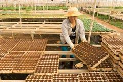 Giardiniere femminile che lavora nel giardino Immagini Stock Libere da Diritti