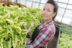 Giardiniere femminile che sorride mentre ispezionare va alla serra fotografia stock libera da diritti