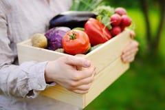 Giardiniere femminile che tiene cassa di legno con le verdure organiche fresche dall'azienda agricola Immagine Stock Libera da Diritti