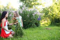 Giardiniere femminile che tiene le verdure organiche fresche dall'azienda agricola Tempo di raccolta Immagine Stock Libera da Diritti