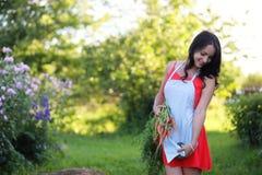 Giardiniere femminile che tiene le verdure organiche fresche dall'azienda agricola Tempo di raccolta Immagini Stock