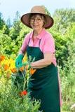 Giardiniere femminile felice che innaffia i suoi fiori Fotografia Stock Libera da Diritti