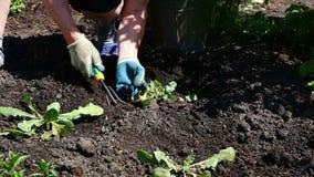 Giardiniere in giardino stock footage