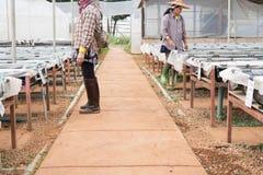giardiniere in idroponico in azienda agricola metodo di coltura delle piante facendo uso di n Fotografia Stock