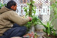 Giardiniere indiano maschio Immagine Stock Libera da Diritti