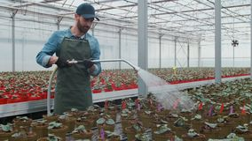 Giardiniere maschio felice Waters Plants e fiori con un tubo in Sunny Industrial Greenhouse video d archivio