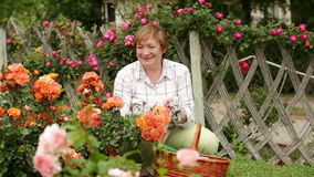 Giardiniere maturo felice della donna stock footage
