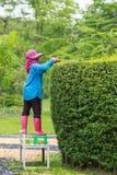 Giardiniere professionista che pota una barriera Immagini Stock Libere da Diritti