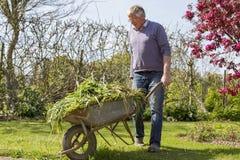 Giardiniere senior con la carriola Fotografia Stock