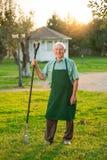 Giardiniere senior con sorridere del rastrello Immagini Stock Libere da Diritti
