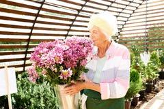 Giardiniere senior Smelling Flowers immagini stock libere da diritti