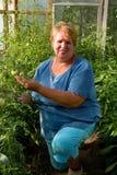 Giardiniere sorridente nella sua serra. Fotografie Stock