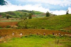 Giardiniere sulla collina Immagine Stock
