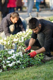 giardinieri Fotografie Stock
