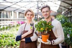 Giardinieri attraenti felici dell'uomo e della donna che tengono il piccolo albero di mandarino Immagine Stock