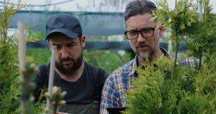 Giardinieri che esaminano pianta archivi video