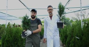 Giardinieri che portano i thuja