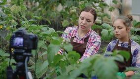 Giardinieri della famiglia in un'annotazione della serra un video circa fare il giardinaggio video d archivio