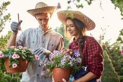 Giardinieri della ragazza e del tipo in vasi di paglia di una tenuta dei cappelli con la petunia meravigliosa sul percorso del gi immagine stock libera da diritti
