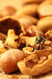 Giardinieri miniatura matti Immagine Stock Libera da Diritti