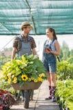 Giardinieri sorridenti che discutono mentre spingendo le piante in carriola alla serra Fotografie Stock