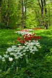 Giardino Immagini Stock