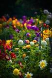 Giardino Fotografia Stock Libera da Diritti