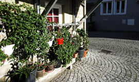 Giardino Fotografie Stock Libere da Diritti