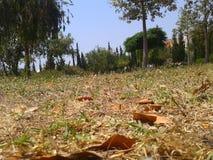 Giardino Fotografie Stock