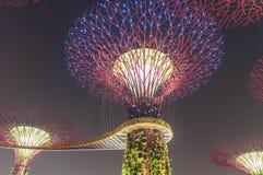 Giardino alla notte, Singapore di Supertree Fotografia Stock
