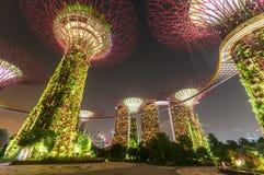 Giardino alla notte, Singapore di Supertree Fotografie Stock Libere da Diritti