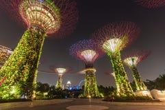 Giardino alla notte, Singapore di Supertree Immagine Stock