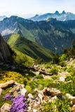 Giardino alpino Immagine Stock