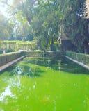 Giardino Andalusia dello stagno Fotografie Stock Libere da Diritti